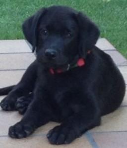 Licencia Actividad Tienda Animales Clínica Veterinaria Peluquería Canina